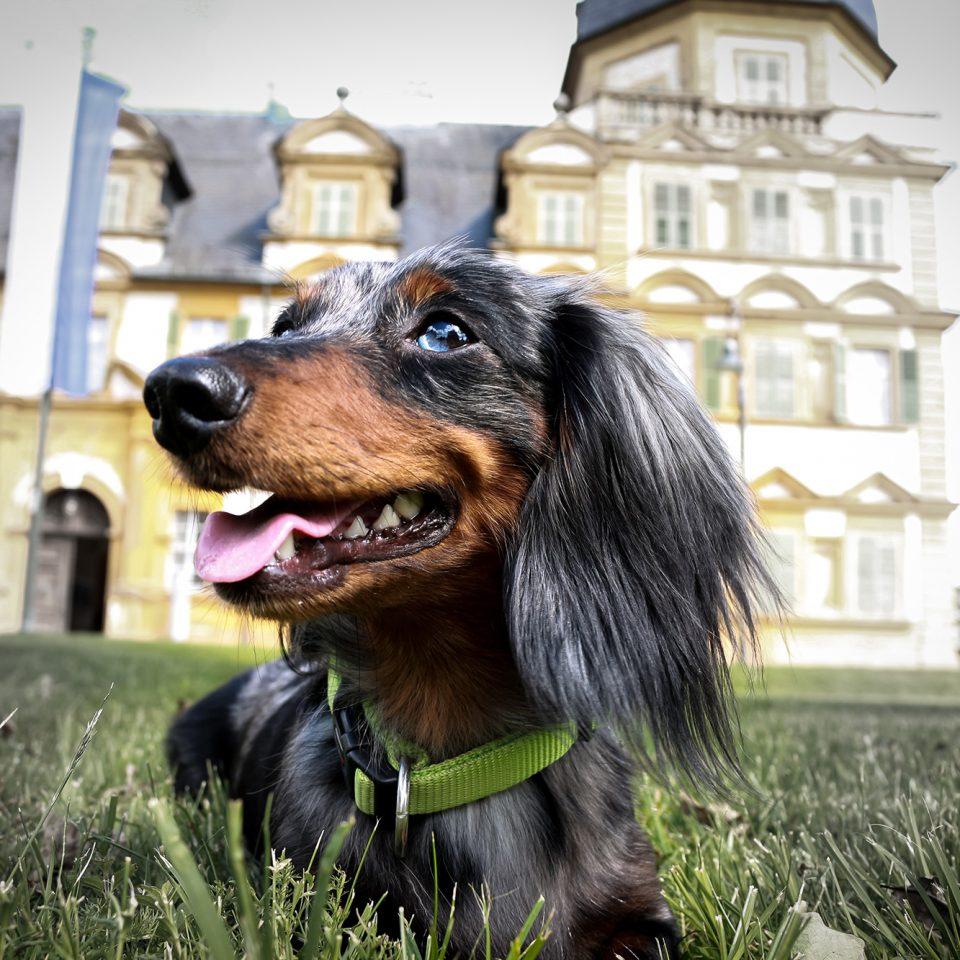 Hund vor Schloss