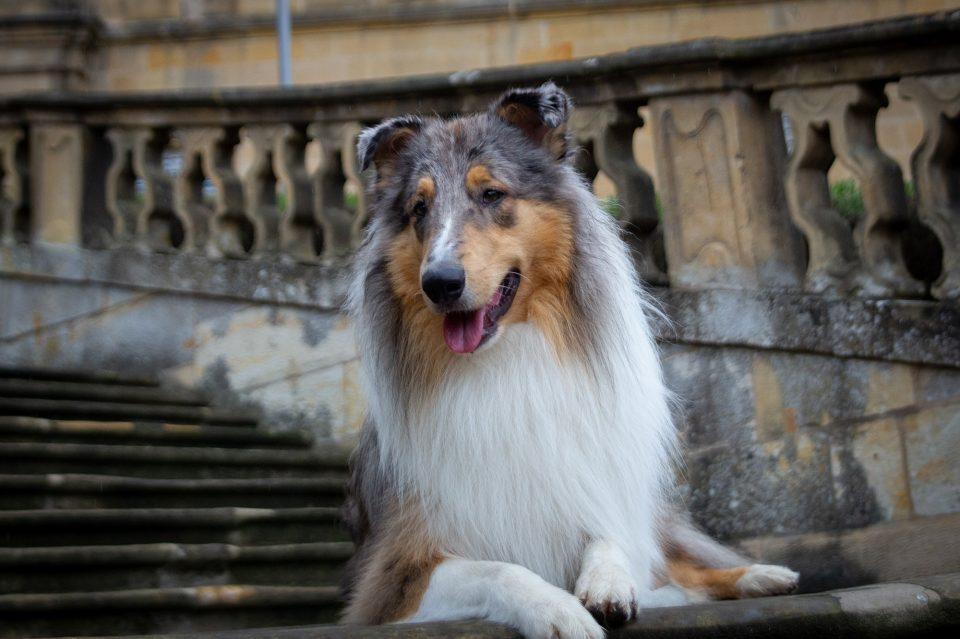 Portrait Hund auf Treppe