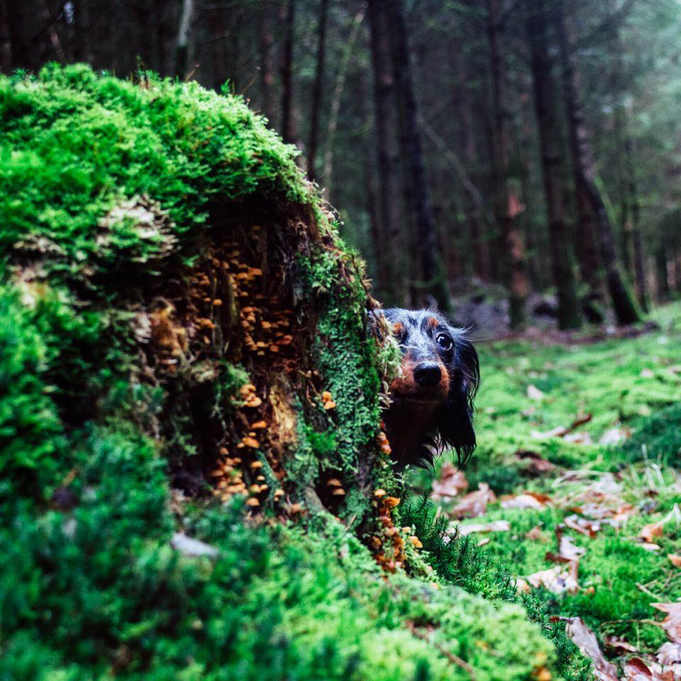 Im Wald mit Aivi & Lola